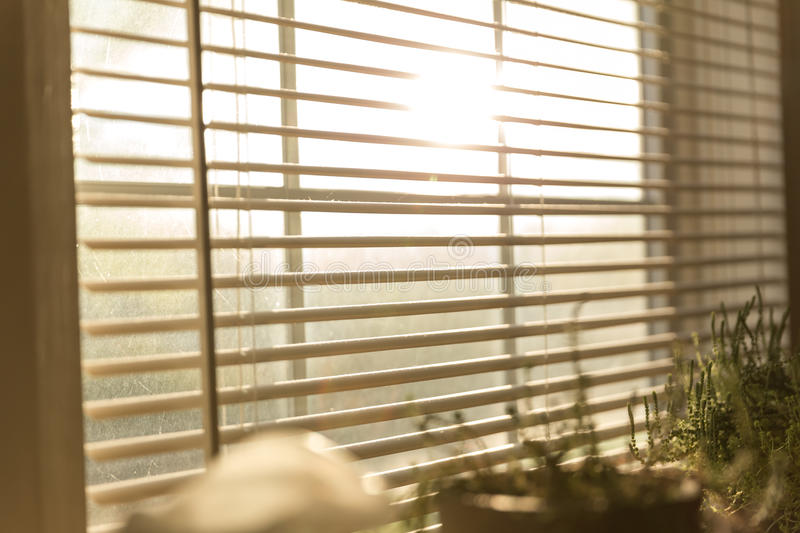 Sunlight Through Blinds. Opened blinds with sunlight coming in through window. Plants nearby royalty free stock photos