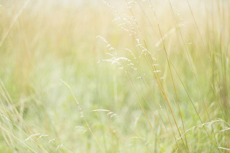 Sunlight blurred nature background. royalty free stock photography