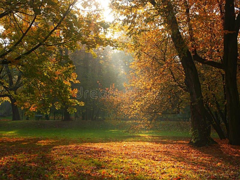 Sunlight break-through. Sun rays breaking through the trees in fall time