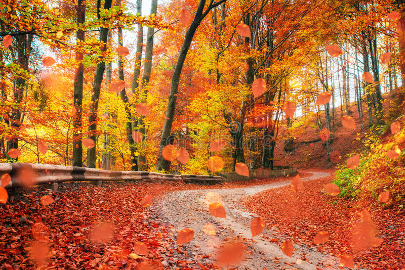 Sunlight breaks through the autumn leaves of trees.  royalty free stock image