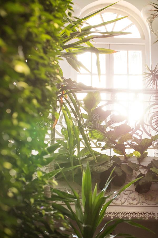 Sunlight coming into glasshouse royalty free stock image