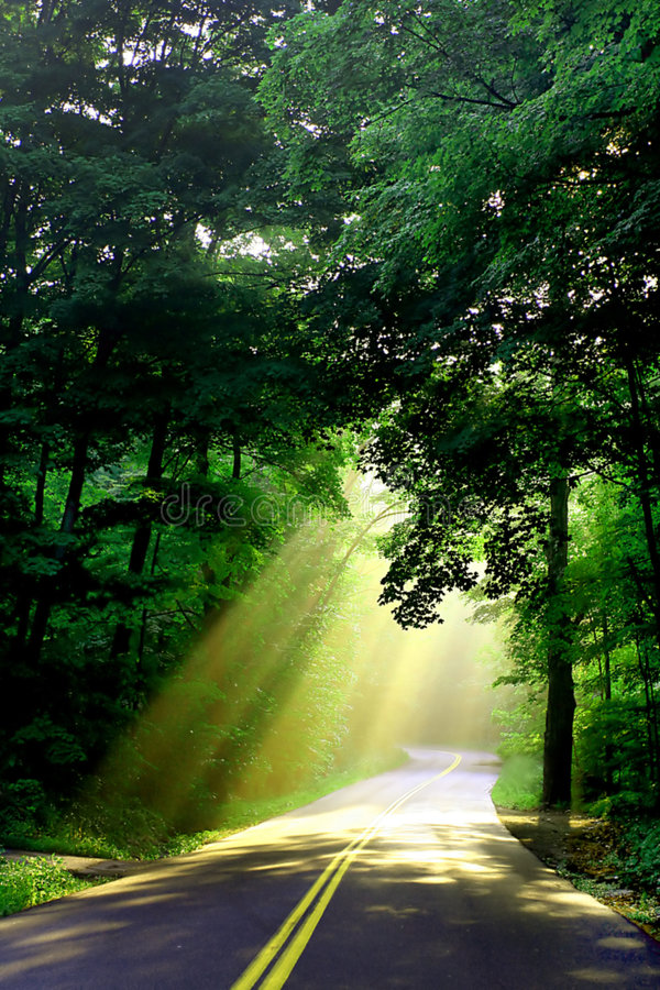 Sunlight on country road stock images