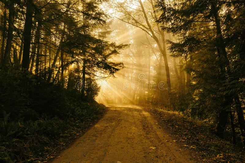 Sunlight On Dirt Path In Forest Free Public Domain Cc0 Image