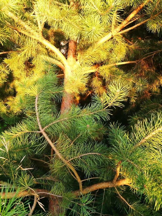 Sunlight falls beautifully on the tree trunk royalty free stock photo