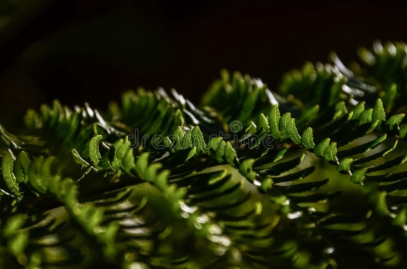 Sunlight fern royalty free stock photography