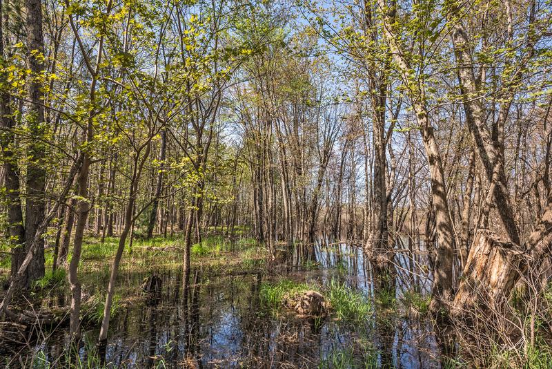 Calm Water Reflections. Sunlight filterng through the trees and lighting up an area of calm water with contrasting green grasses stock photo