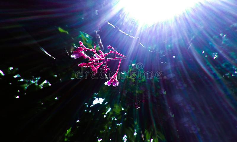Sunlight into the focus the flower and make beautiful flower color royalty free stock photos