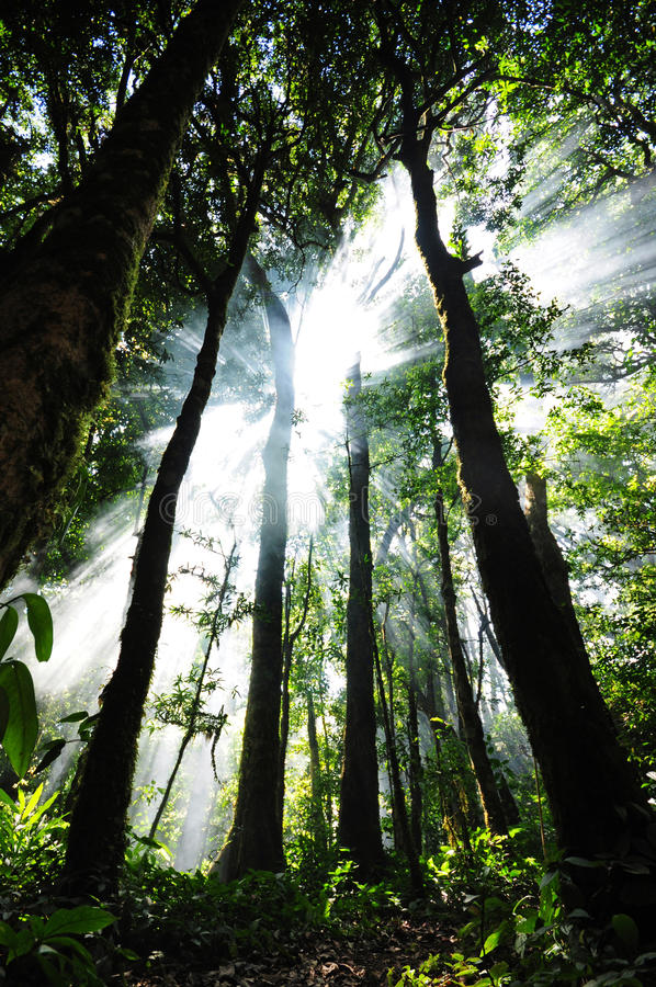 Sunlight In The Forest Royalty Free Stock Photography