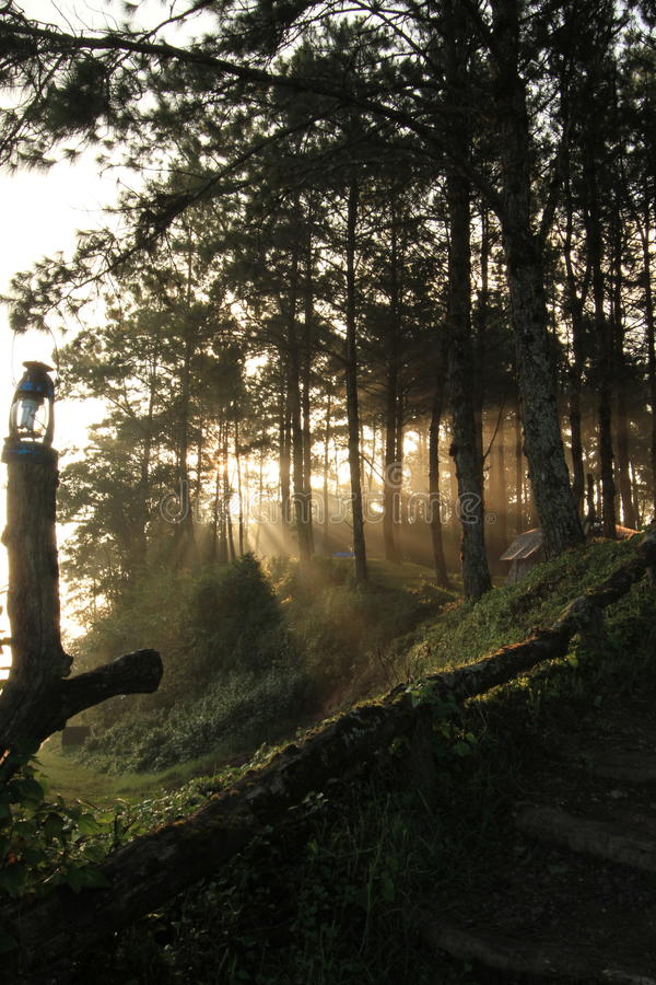 Download Sunlight In The Forest Stock Photography - Image: 25400242