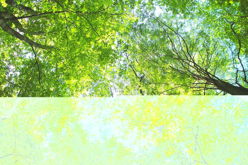 Sunlight In Forest Royalty Free Stock Photos
