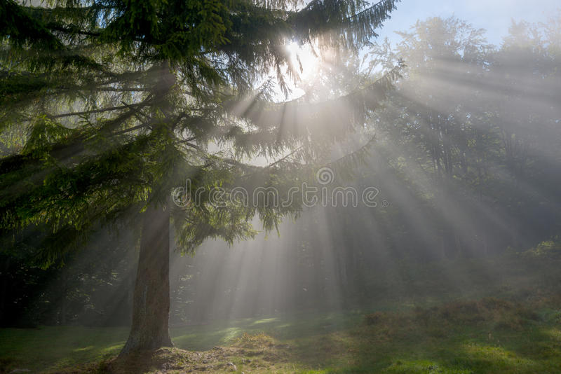Sunlight in forest stock photo