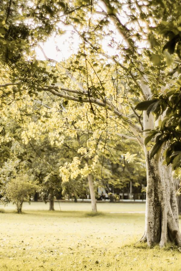 Sunlight on grass in spring among tress fresh nature happy time background.  royalty free stock photo