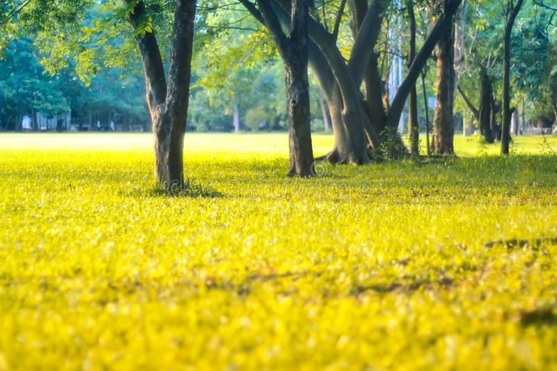 Sunlight on grass in spring among tress fresh nature happy time background.  stock images
