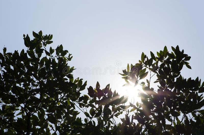 Sunlight through green tree with cloud sky stock image