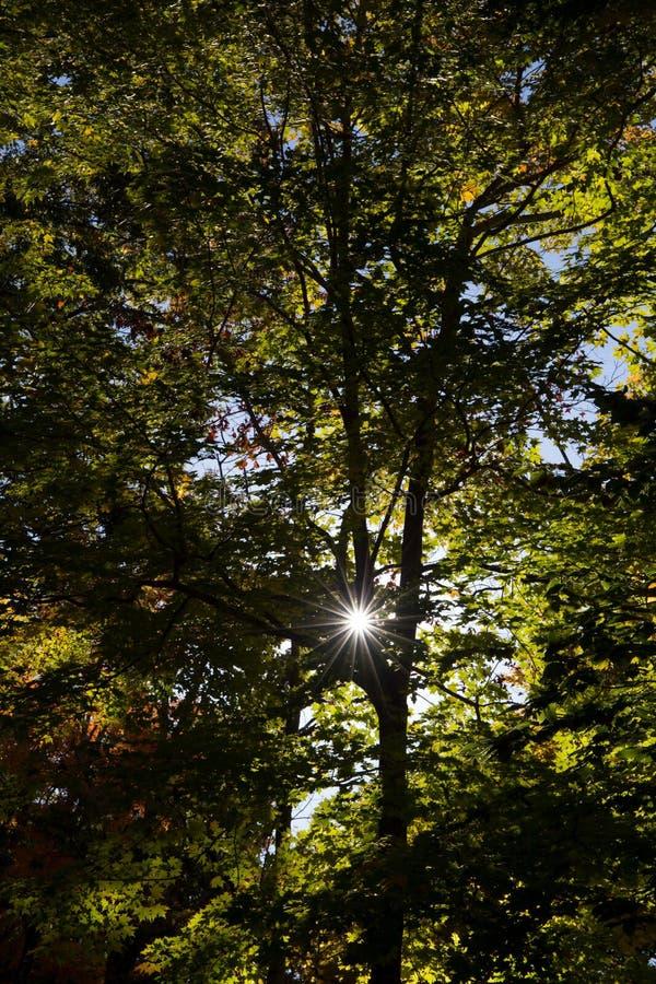 Sunlight Through Green Trees Free Public Domain Cc0 Image