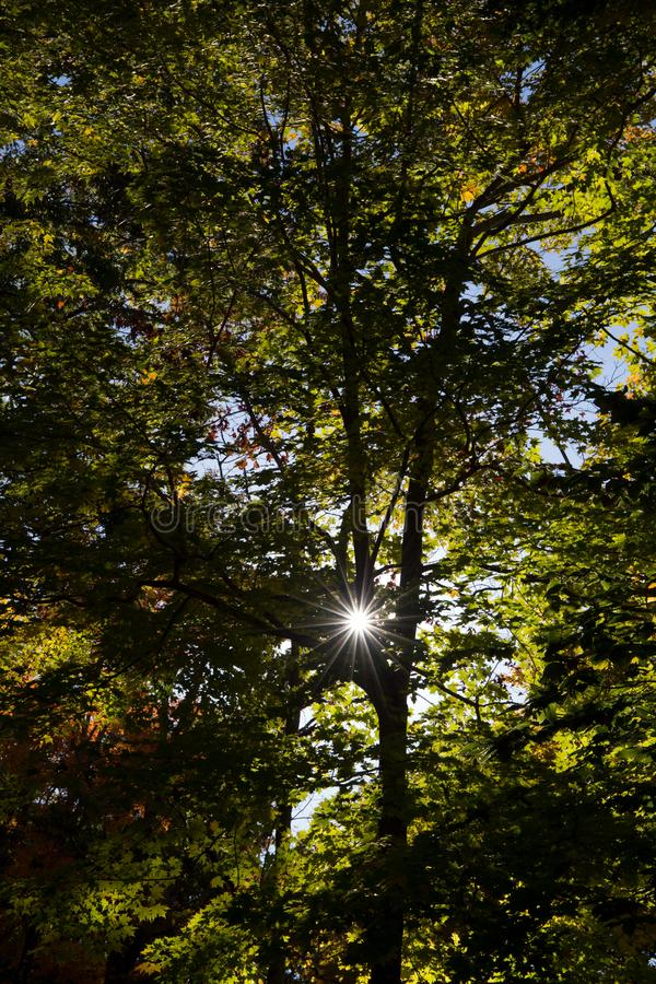 Sunlight through green trees stock photography