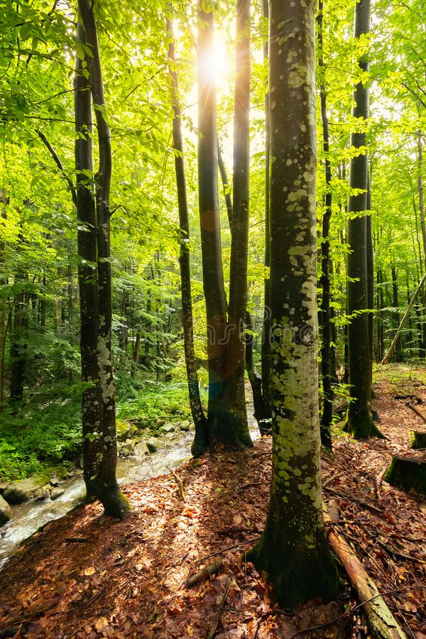 Free Sunlight In Summer Forest Stock Photos - 134529663