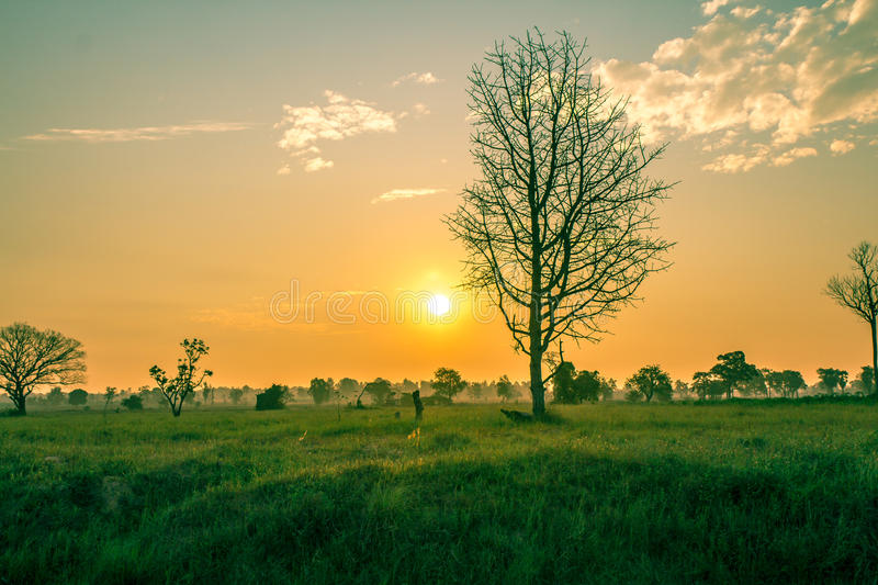 Sunlight in the morning air healthy. stock photo