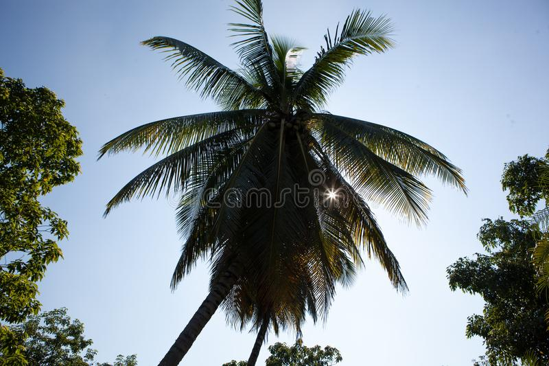 Palm tree in Cuba royalty free stock photography