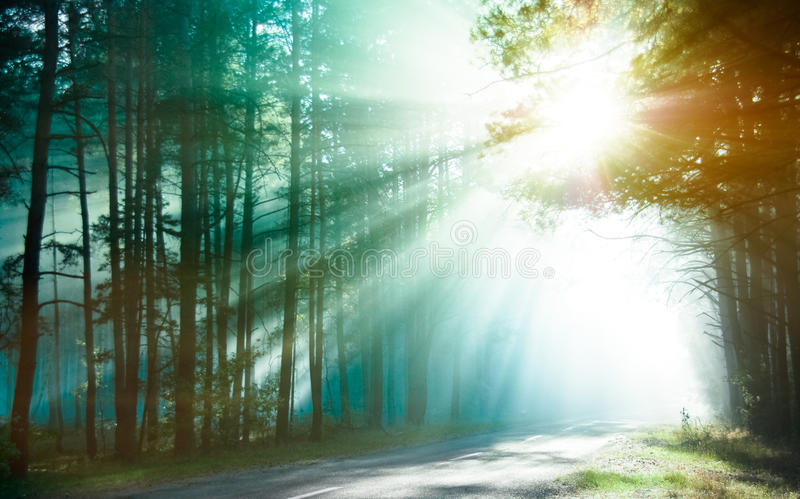 Download Sunlight rays stock photo. Image of country, rays, track - 25430370
