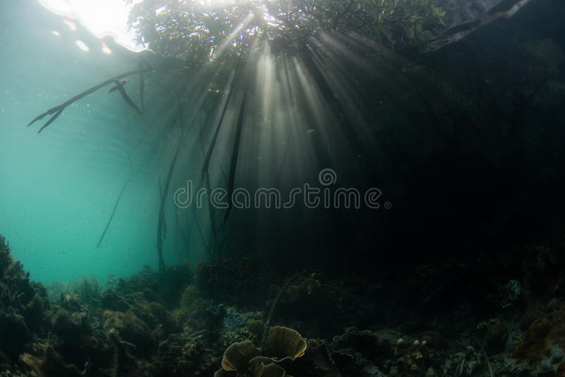 Sunlight and Shadows in Raja Ampat Mangrove. Light shines into the shadows of a mangrove forest in Raja Ampat, Indonesia. This region is known for its incredible royalty free stock photos