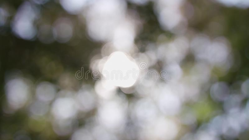 Sunlight shining through the leaves of trees, natural blurred background, Nature abstract background, nature green bokeh royalty free stock photos