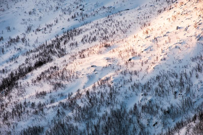 Sunlight on snow slope hill with dry forest in winter stock photos