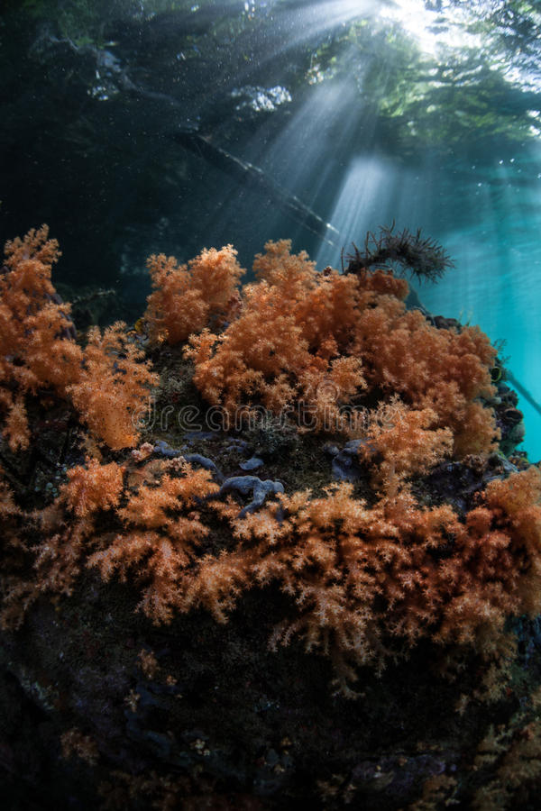 Sunlight and Soft Corals in Indonesia stock photos