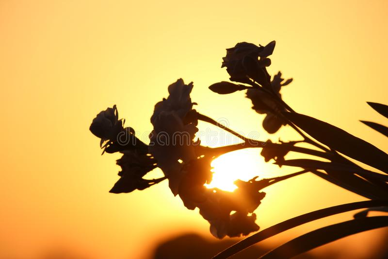 Sunlight stock images