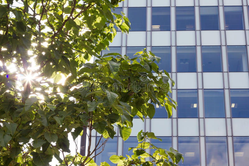 Sunlight Through Tree By Modern Office Building. Sunlight filters through tree leaves by modern office building, glass and metal construction. Spinningfield royalty free stock photography