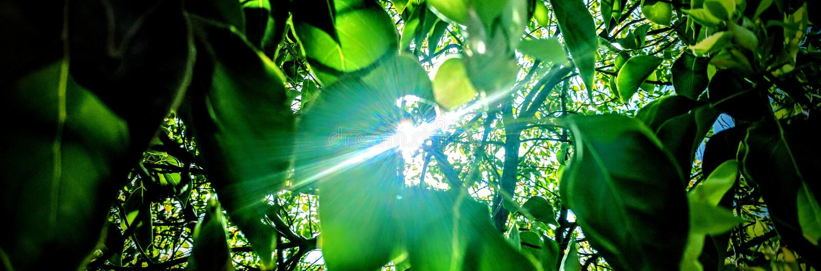 Sunlight through the tree royalty free stock images