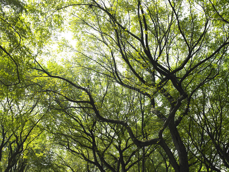 Download Sunlight Through the Trees stock photo. Image of outdoors - 12938570