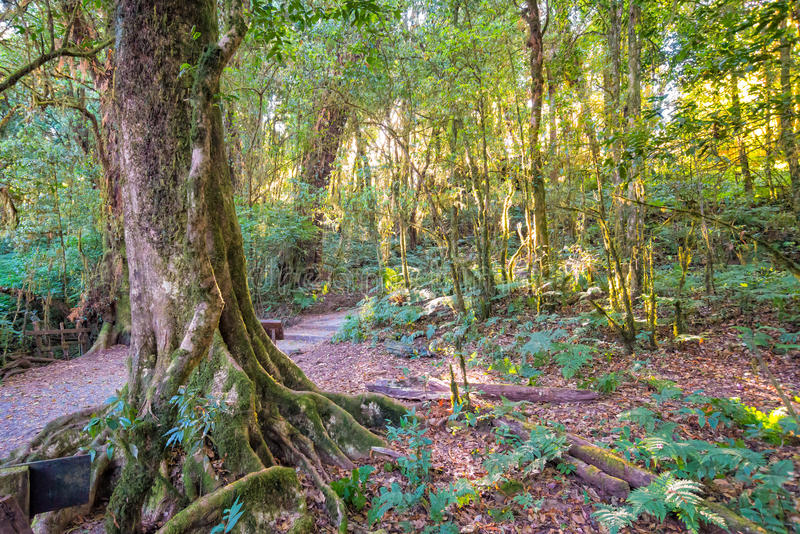Sunlight with trees in forest royalty free stock photography