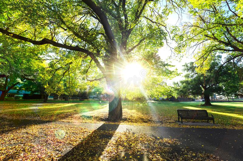 Sunlight through the trees in the park. Fresh air and bright morning for exercise on greenfield. stock photos