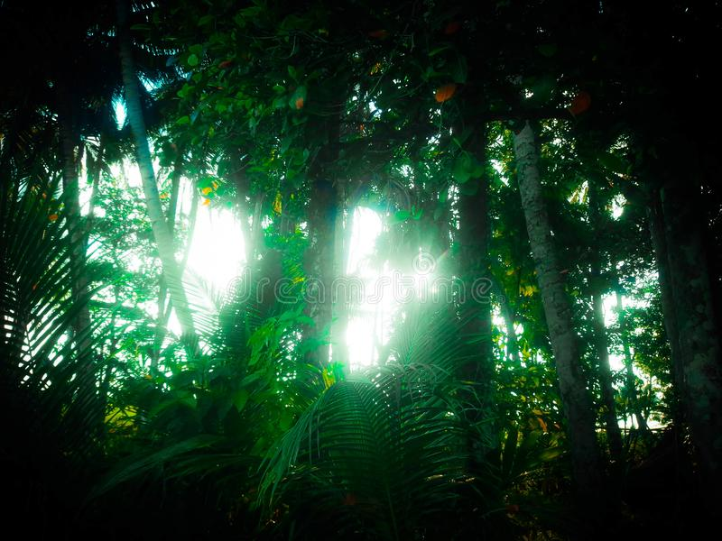 Sunlight through tropical forest royalty free stock photo