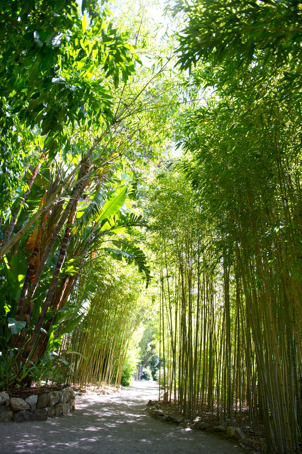 Download Sunlight In Tropical Garden. Bamboo Trees Royalty Free Stock Photo - Image: 23217015