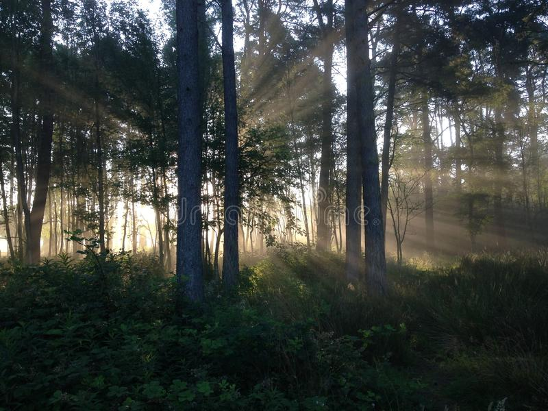 Mist of early morning and sun beams in woods stock images