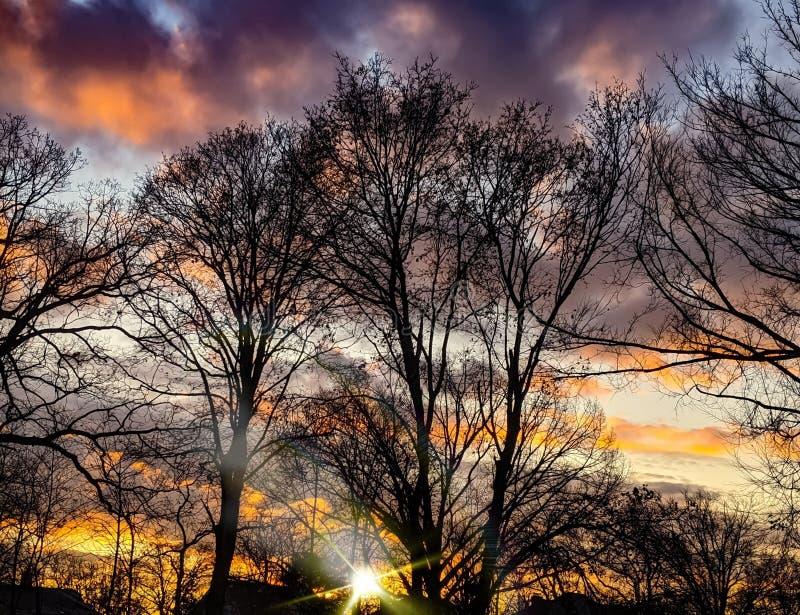 Sunlight Y Colorida Puesta De Sol Otoño Sobre Las Ramas De Los Árboles Blancos foto de archivo