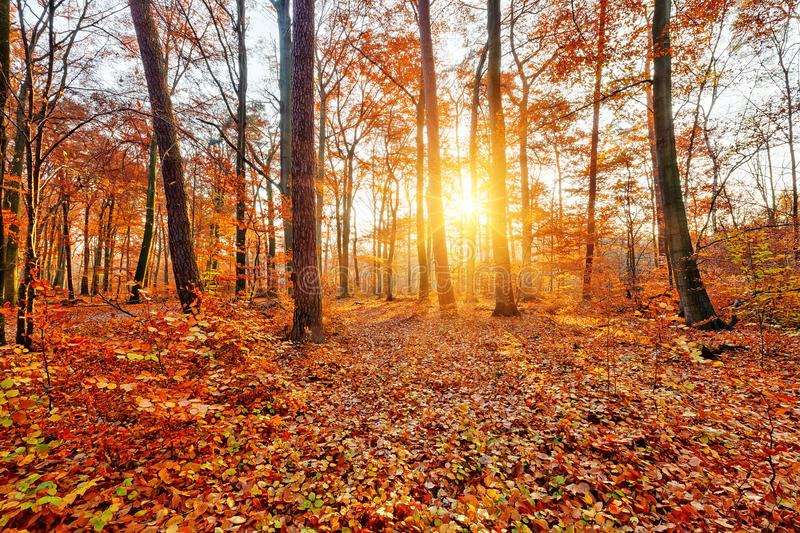 Sunlighted autumn forest stock images