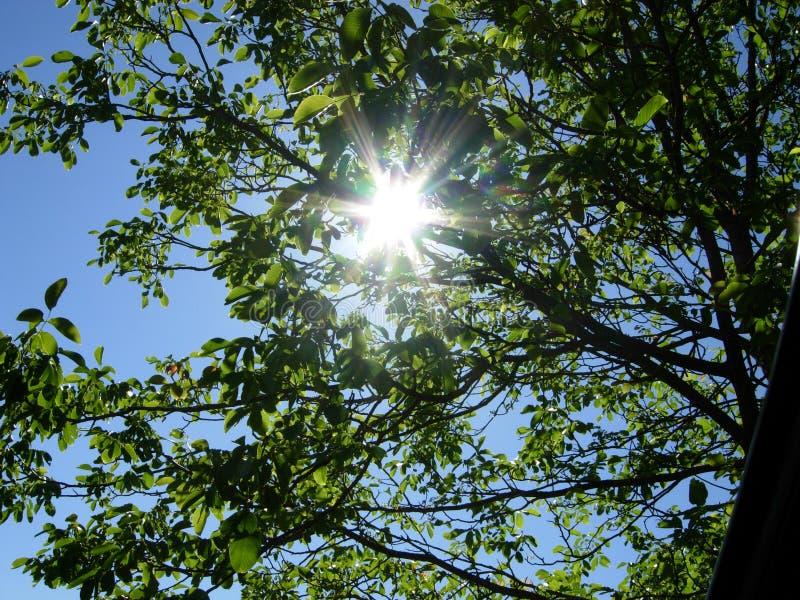 Sunlights στο δέντρο στοκ εικόνα