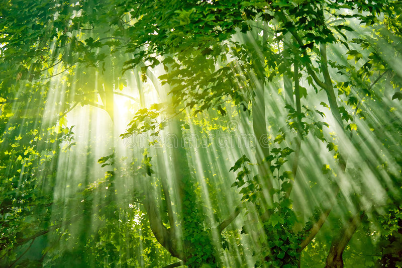 Sunlights mágicos na floresta fotografia de stock royalty free