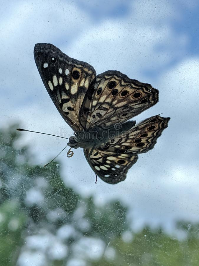 Sunlit Butterfly stock foto