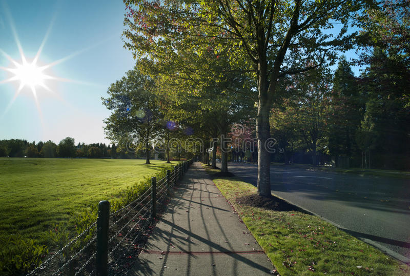 Sunlit colored boulevard royalty free stock photo