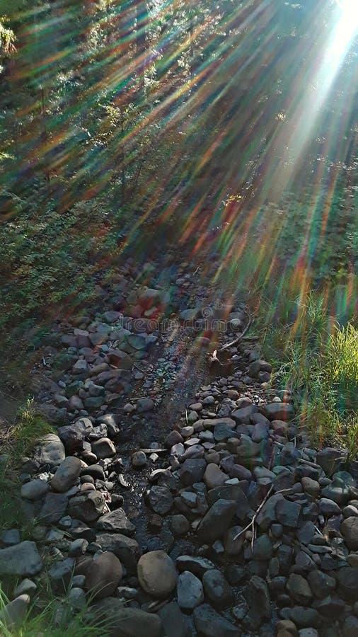 Sunlit Creek stock afbeeldingen
