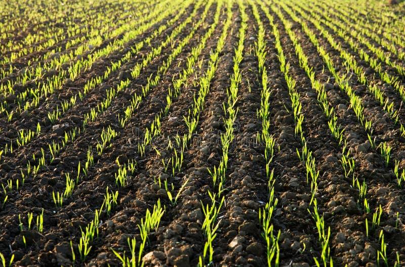 sunlit fält som planteras arkivfoton
