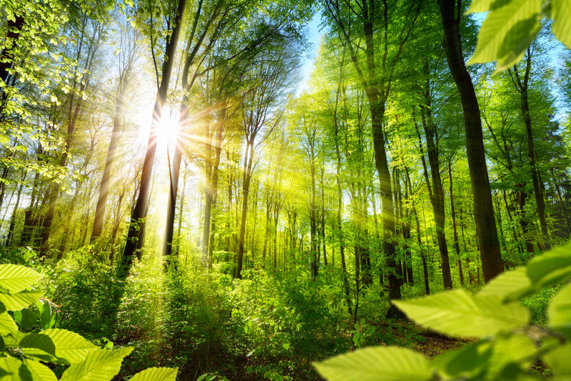 Sunlit foliage in the forest stock image