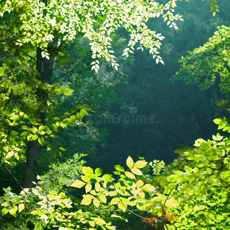Free Sunlit Forest Royalty Free Stock Image - 15197736