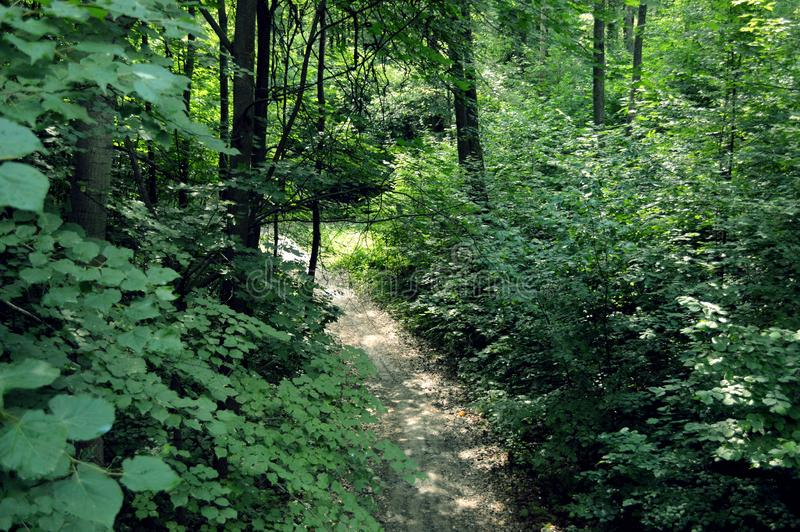 Sunlit Forest Path, fantastic beauty of nature royalty free stock photos