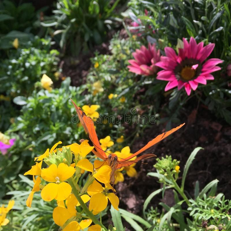 Sunlit garden florals with butterfly. royalty free stock images