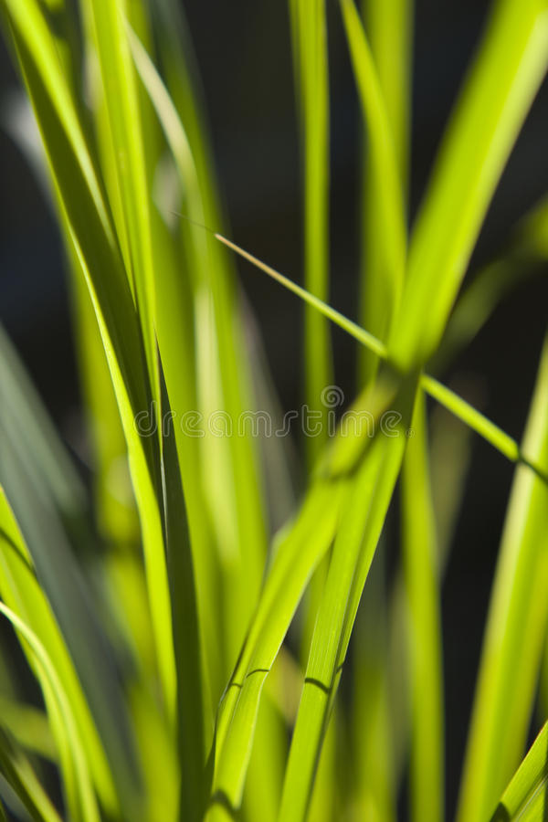 sunlit gräs arkivfoto